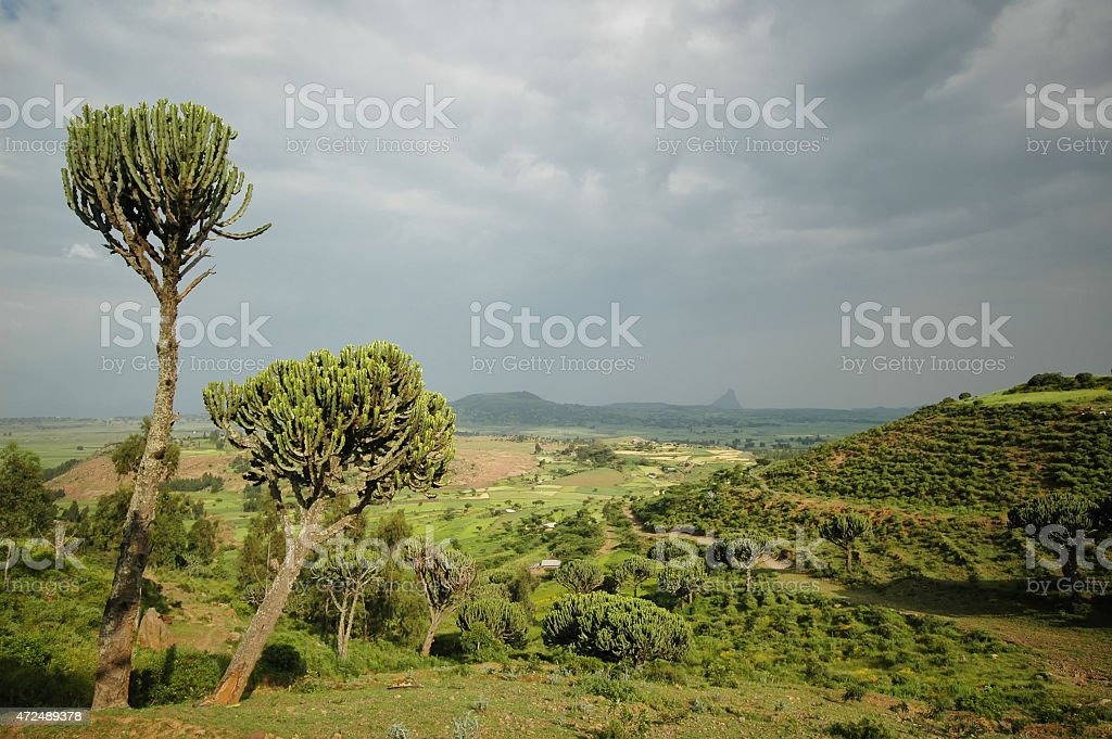 After the storm green Cactus tree stock photo