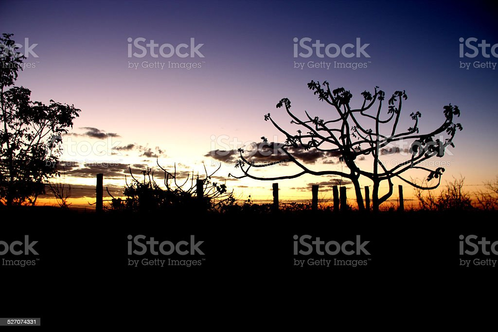 Afternoon in Chapada dos Veadeiros, at the middle of Brazil stock photo