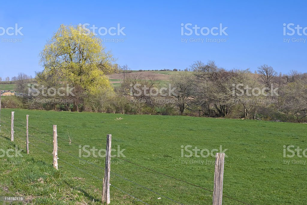 Afternoon in Spring with Willow Tree stock photo