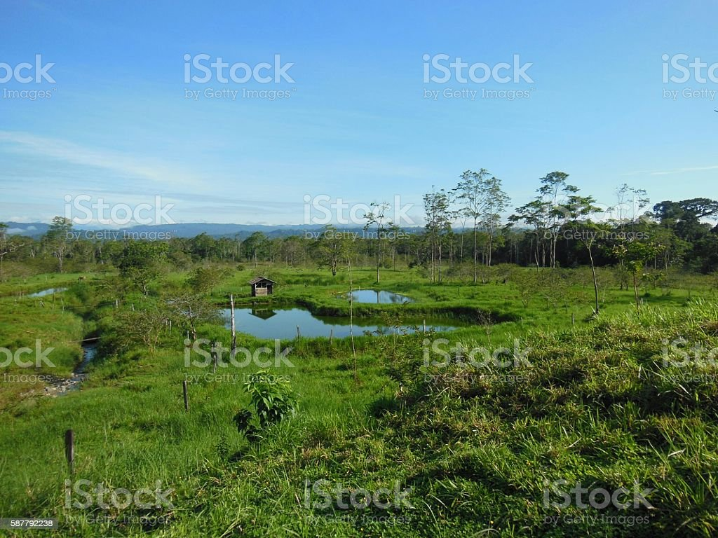 Afternoon in the Amazon stock photo