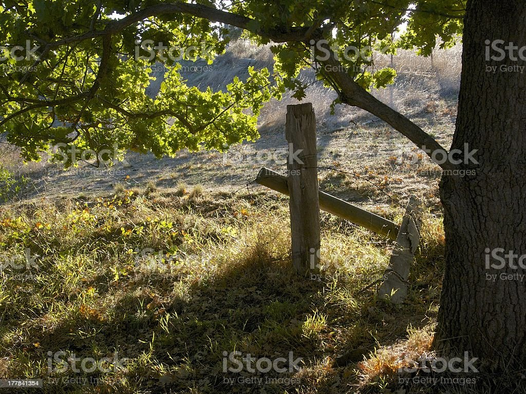 Afternoon light through trees with fence post royalty-free stock photo