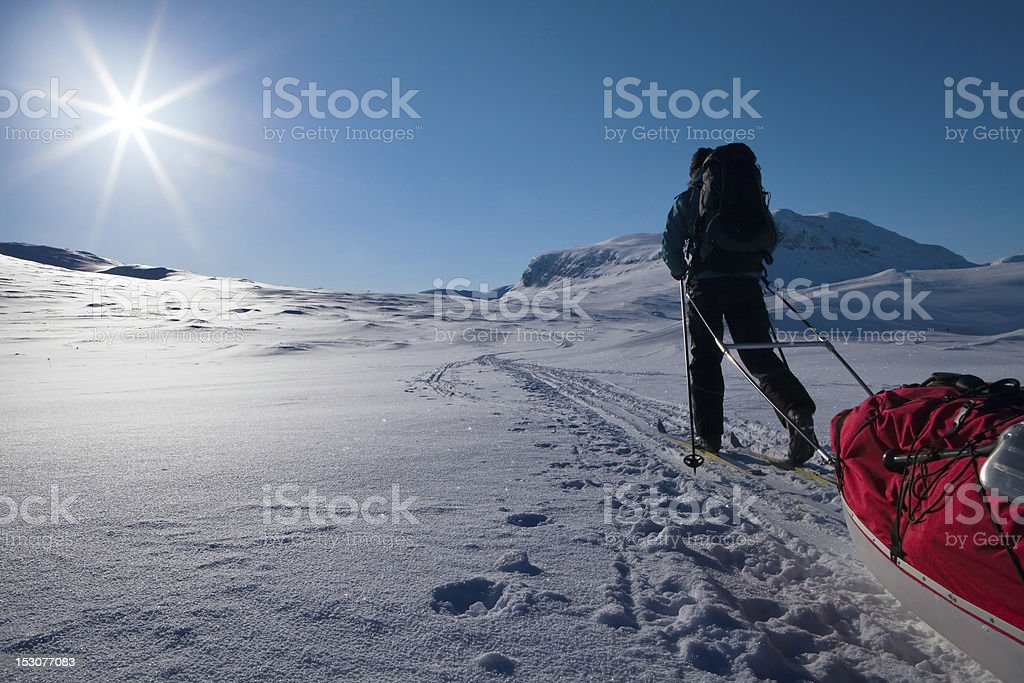 against the Sun royalty-free stock photo