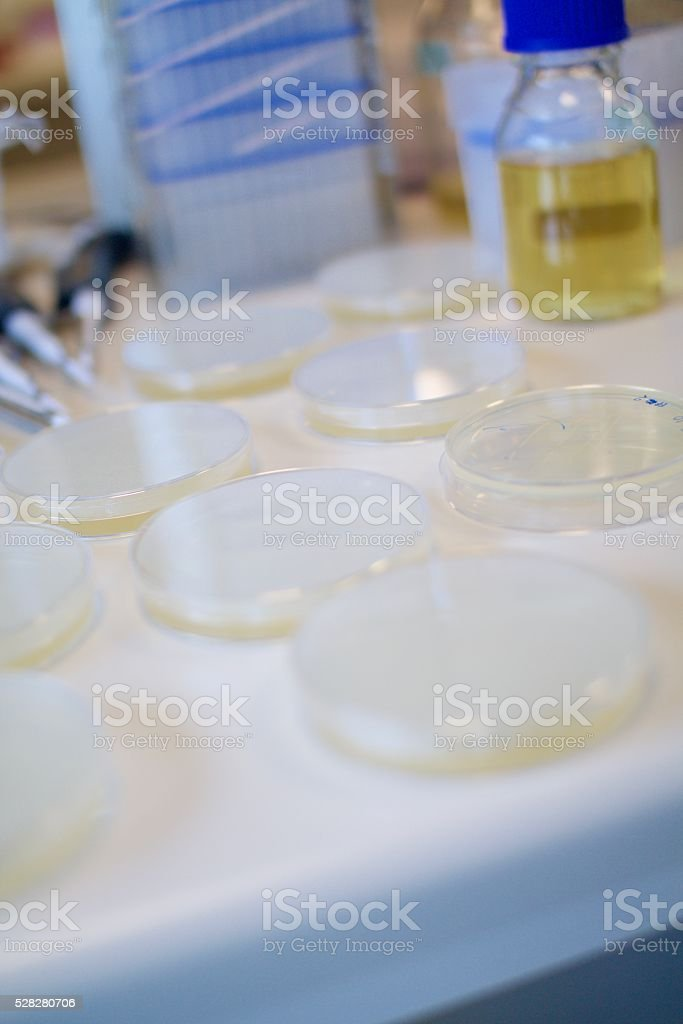 Agar Plates stock photo
