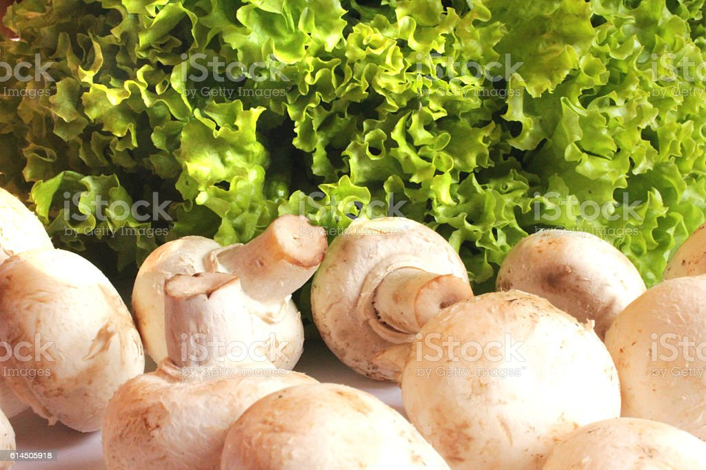 agaric and lettuce ready for the cooking stock photo