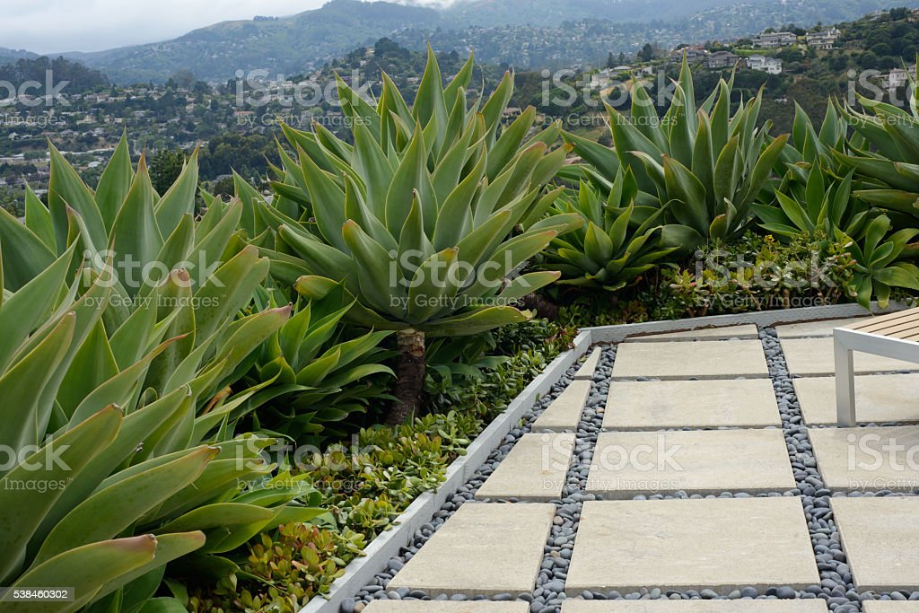 Agave Garden and a Stone Patio stock photo