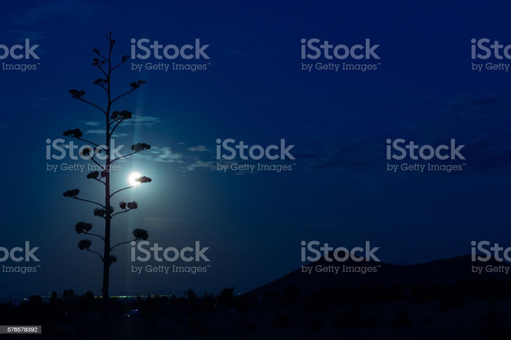 Agave Moon stock photo