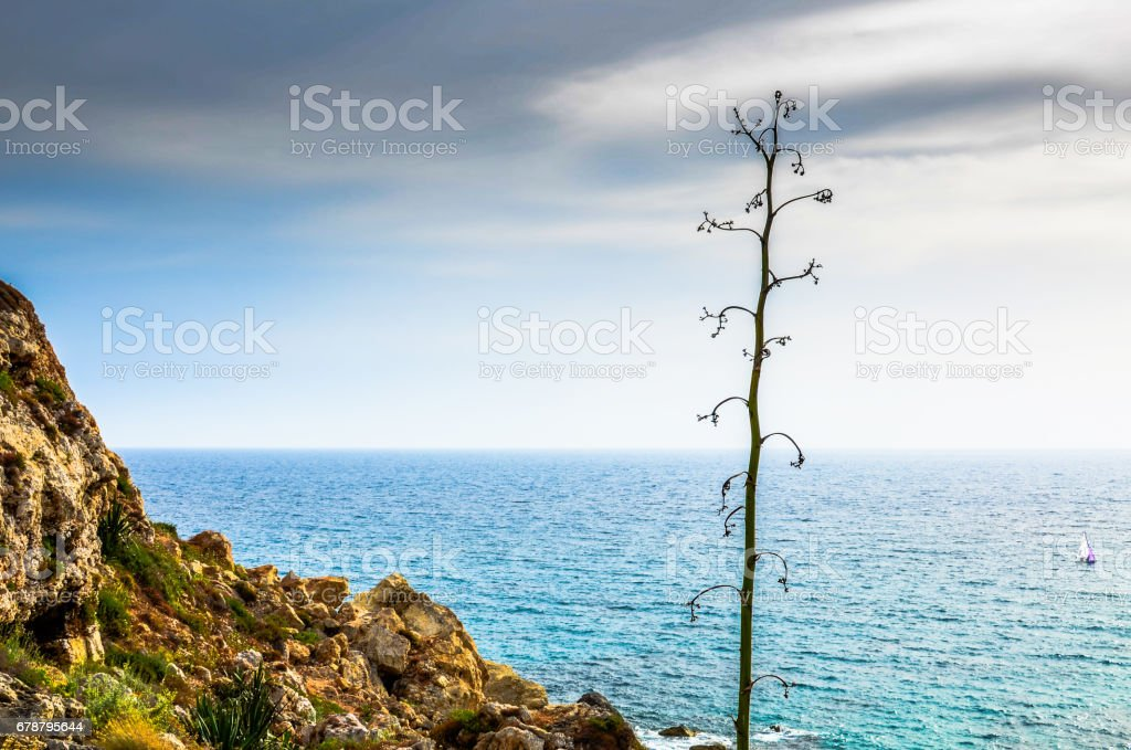 Agave plant on the shore as a boat sails in the Mediterranean Sea stock photo