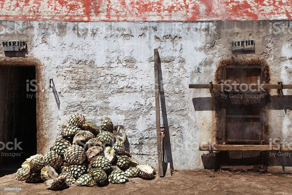 Agaves ready to be steamed for tequila production stock photo