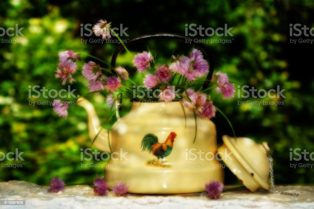 Age kettle with chives - flowers stock photo