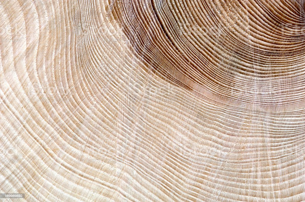 Age of a tree shown by growth rings stock photo
