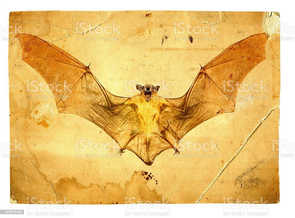 Aged Bat Photo stock photo