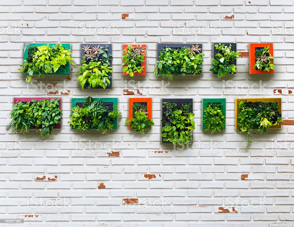 aged brickwall and vertical garden stock photo