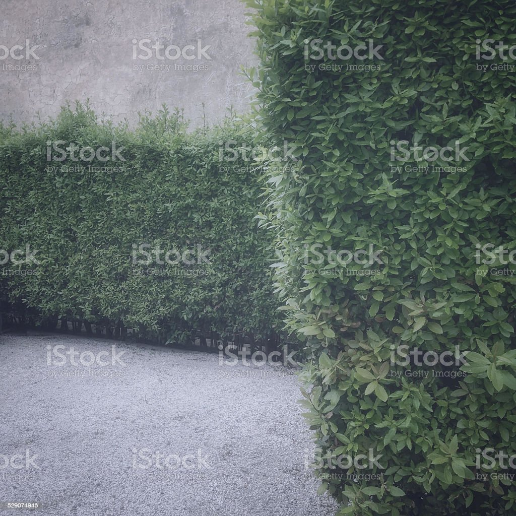 aged photograph of hedges, with copyspace stock photo