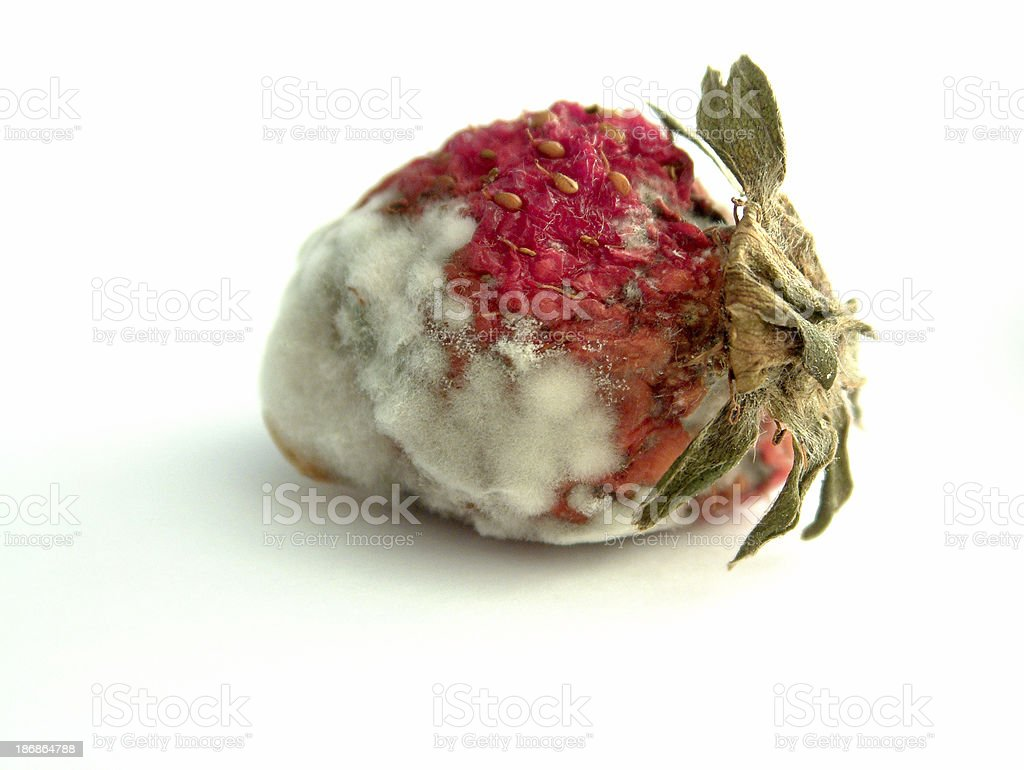 Aged Strawberry royalty-free stock photo