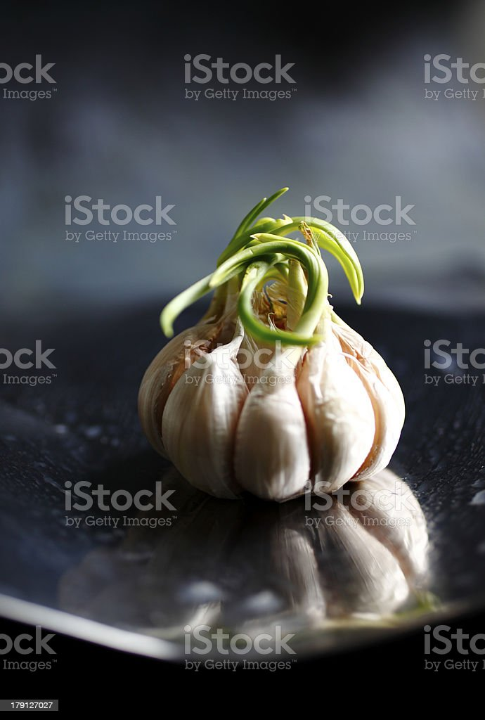 Ageing garlic on a stained reflective surface stock photo