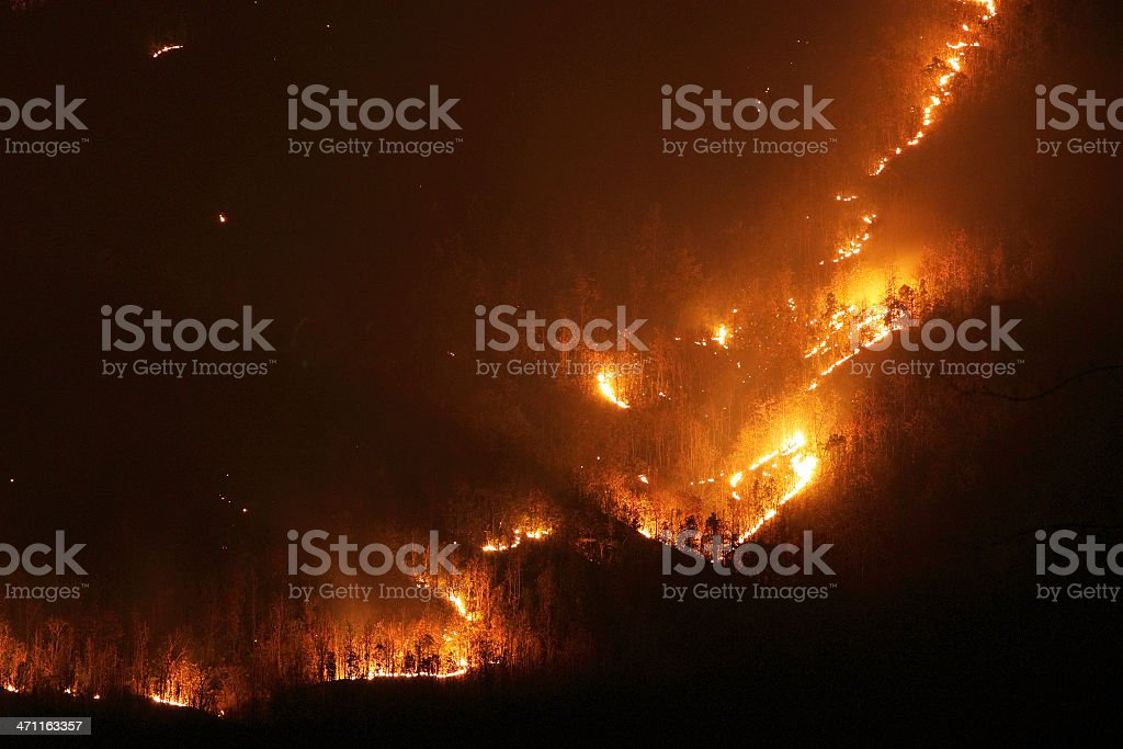 Aggressive forest fire royalty-free stock photo