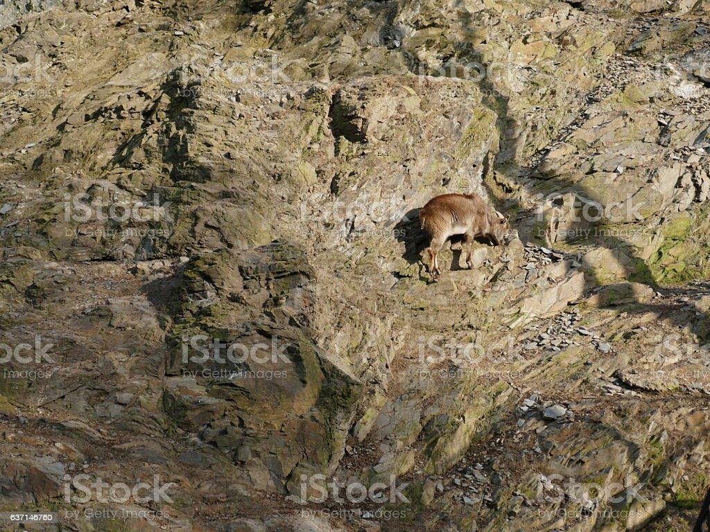 Agile mountain climber stock photo