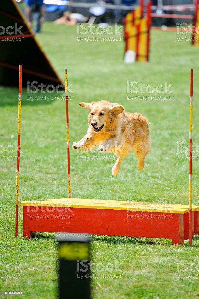 Agility jump royalty-free stock photo
