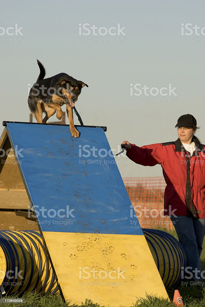 Agility ramp obstacle royalty-free stock photo