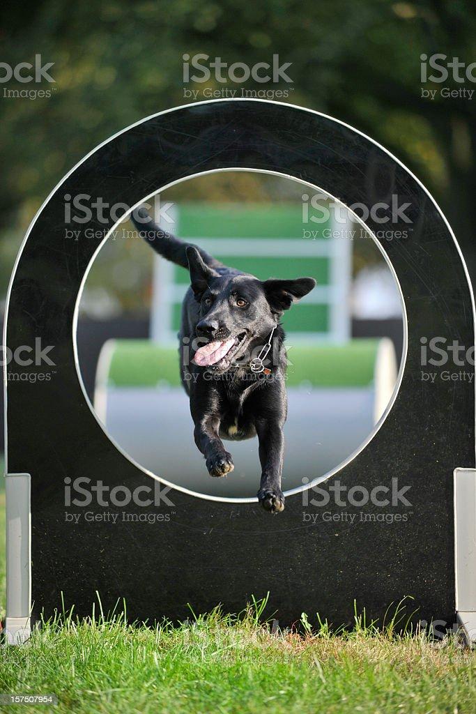 agility sport royalty-free stock photo