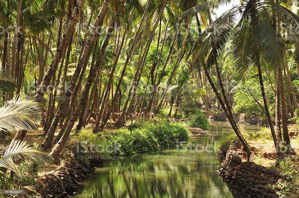 Agonda backwater,Goa,India. stock photo