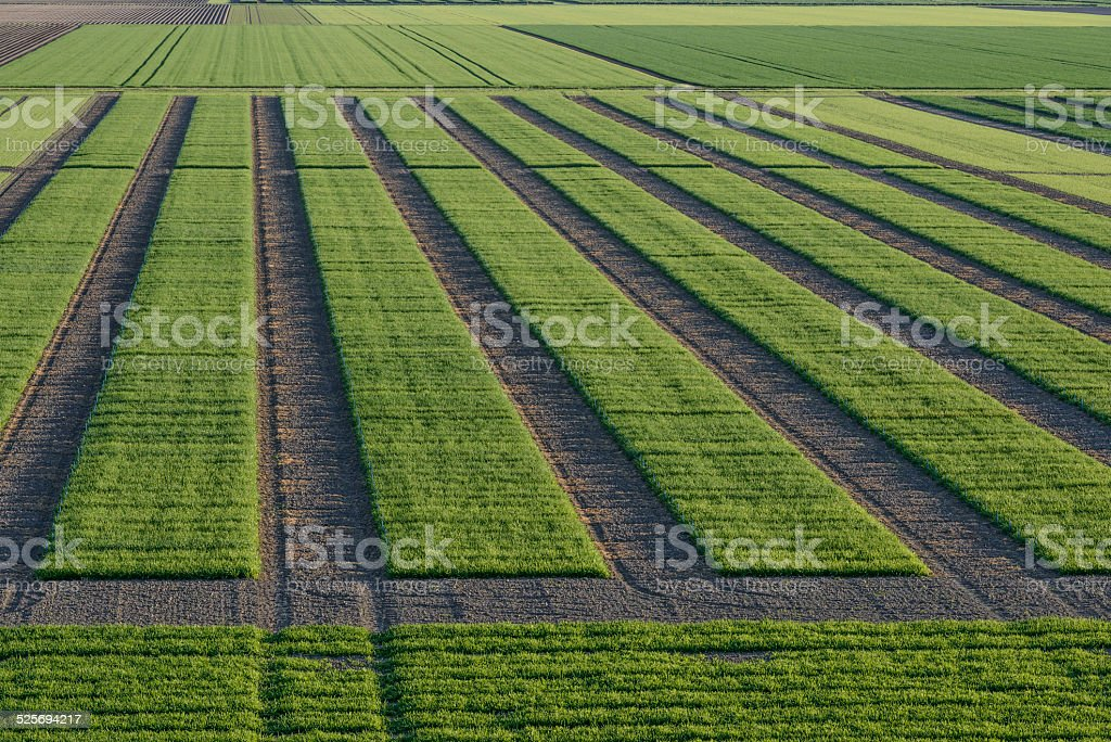 Agrcultural Test Fields stock photo