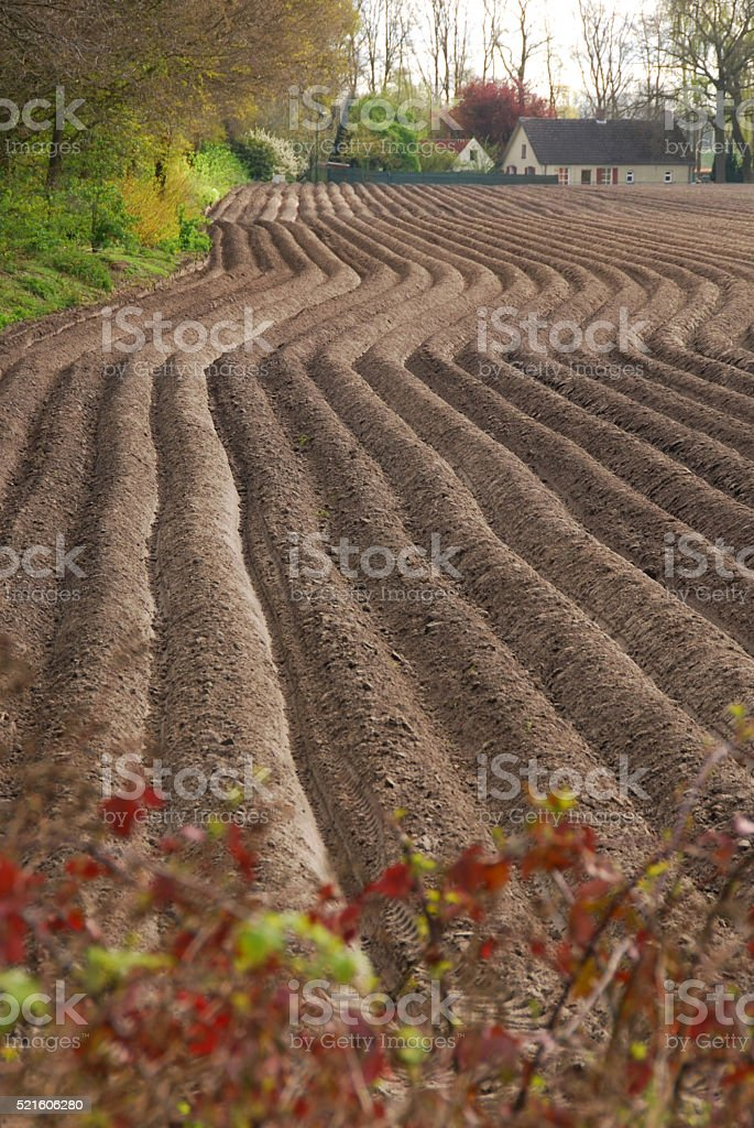 Agriculter landscaped ready for cultivation stock photo