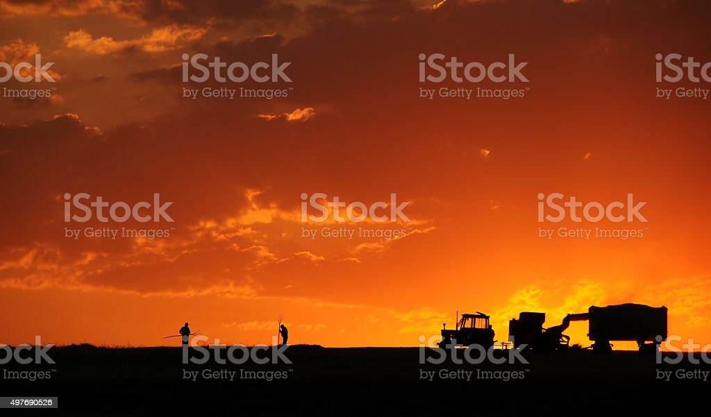 Agricultural Activity At Sunset In Turkey stock photo