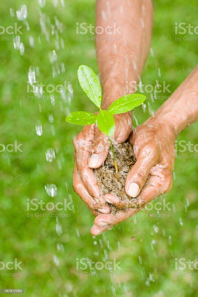 agricultural conservation with tree seedlings stock photo