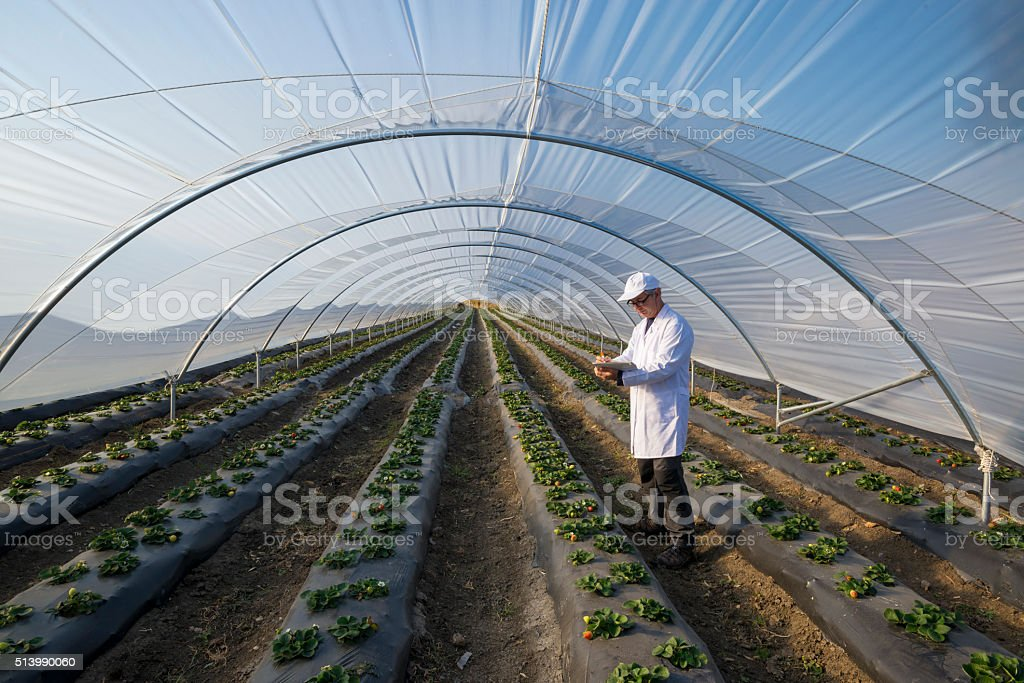 Agricultural engineer working in the greenhouse. Organic agricul stock photo
