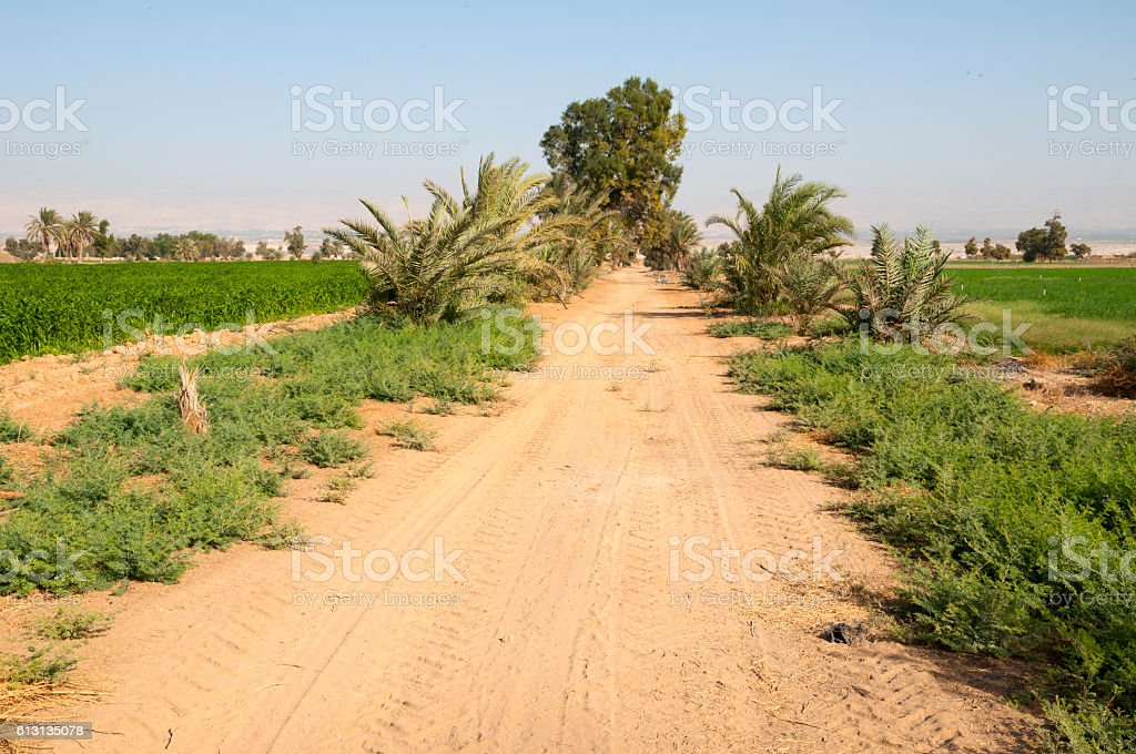 Agricultural field outside Jericho, Palestine stock photo