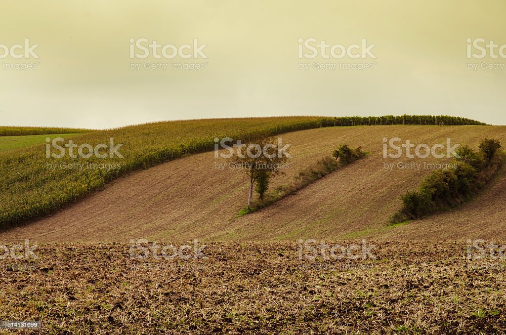 agricultural  field stock photo