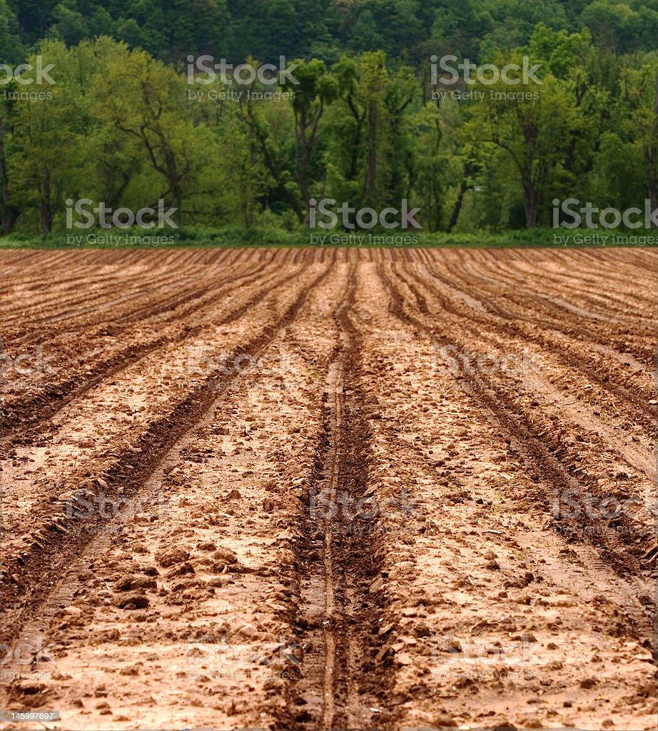 Campo agrícola pronto para plantio foto royalty-free