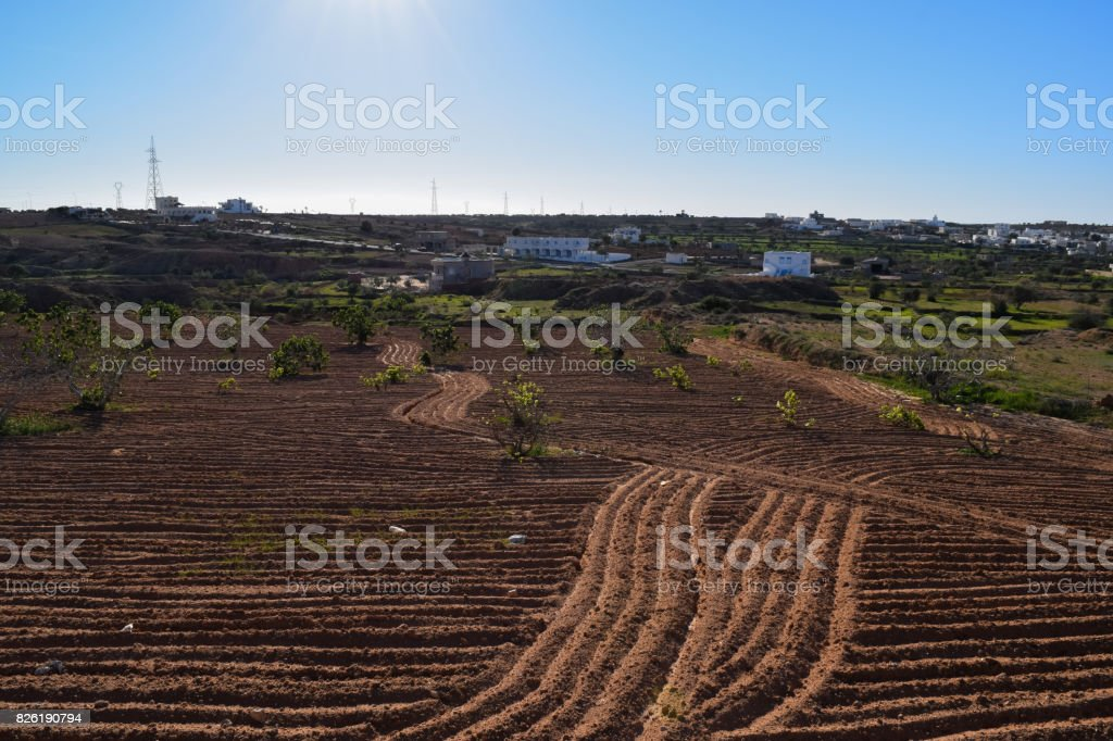 Agricultural fields (plowing) in North Africa. Guellala. Tunisia stock photo
