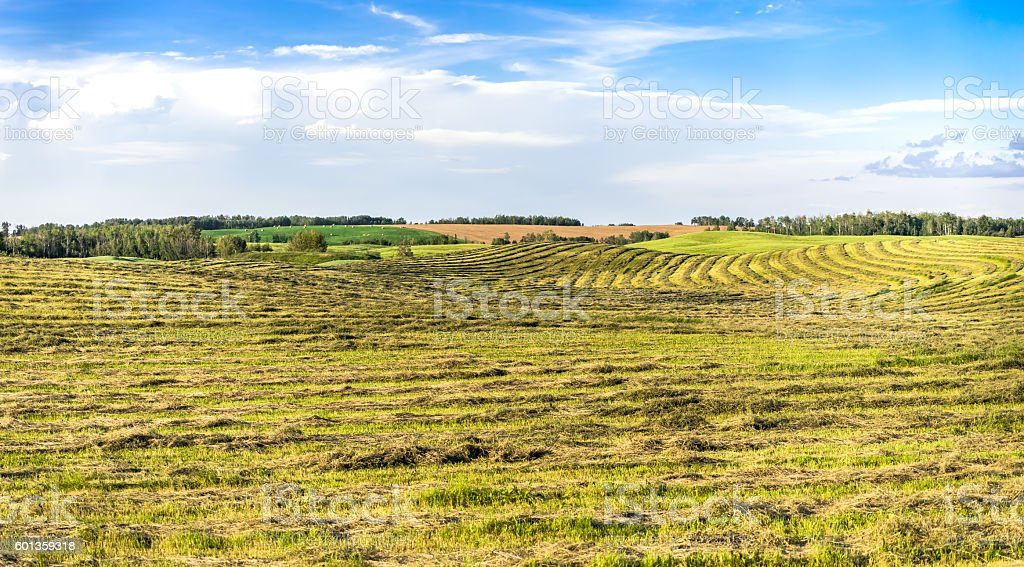 Agricultural fields landcape stock photo