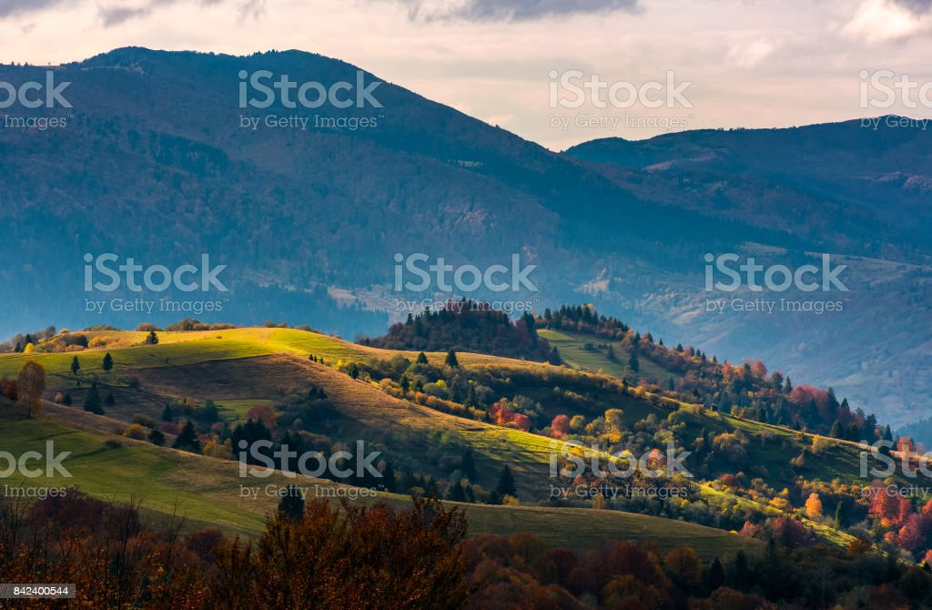 agricultural fields on hillside in evening autumn stock photo
