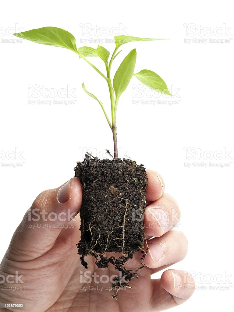Agricultural future royalty-free stock photo