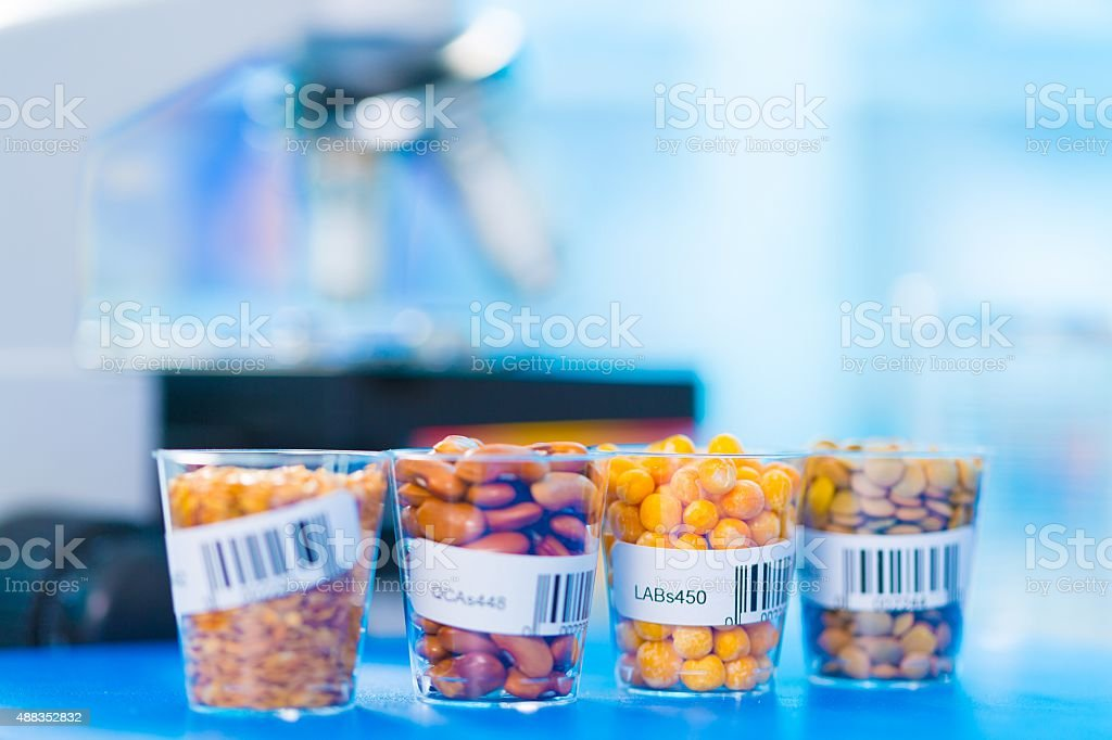 agricultural grains and legumes in the laboratory stock photo