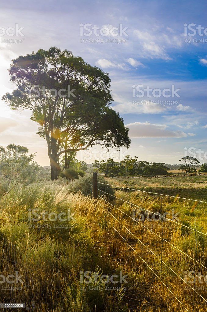 Agricultural landscape, Barbed fence paddock in Australian outba stock photo