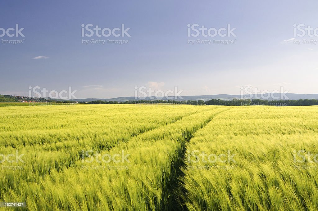 Agricultural Landscape in evening light royalty-free stock photo