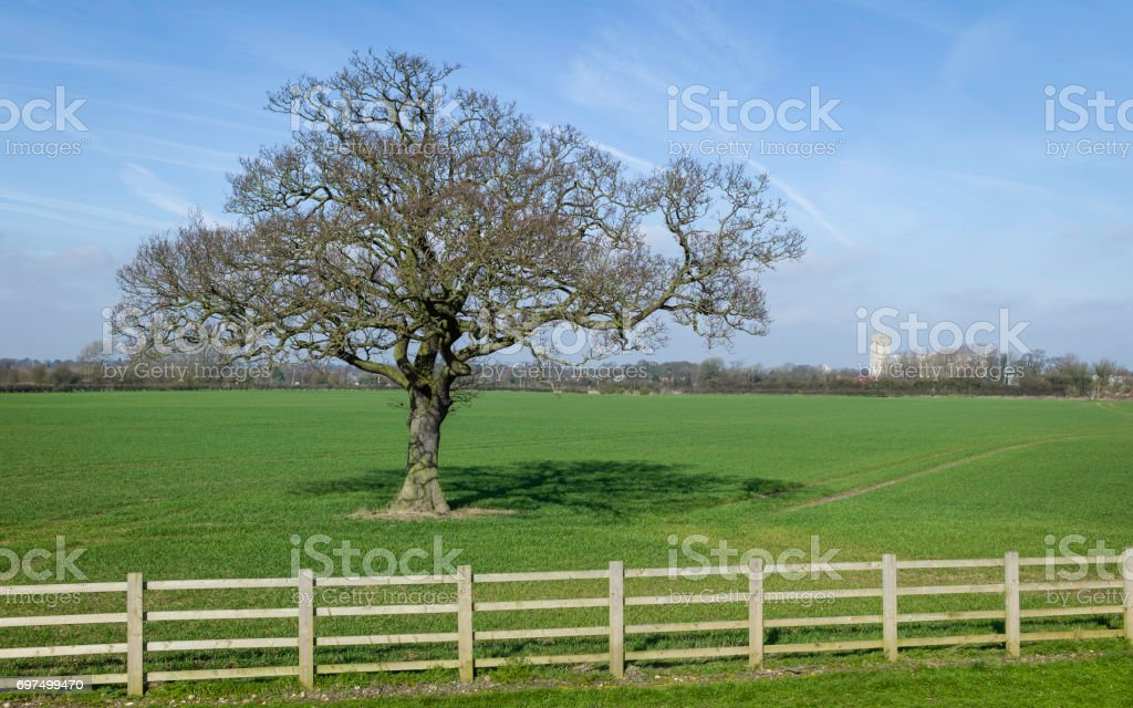Agricultural landscape in spring with minster on horizon, Beverley, UK. stock photo