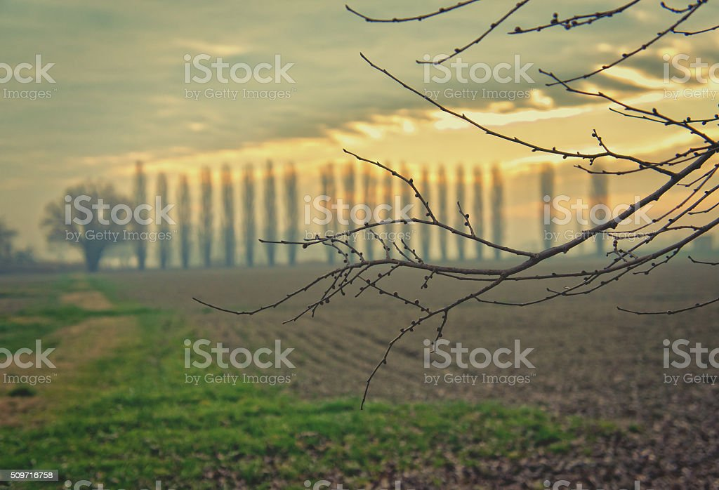 Agricultural landscape in the Po valley - Italy stock photo