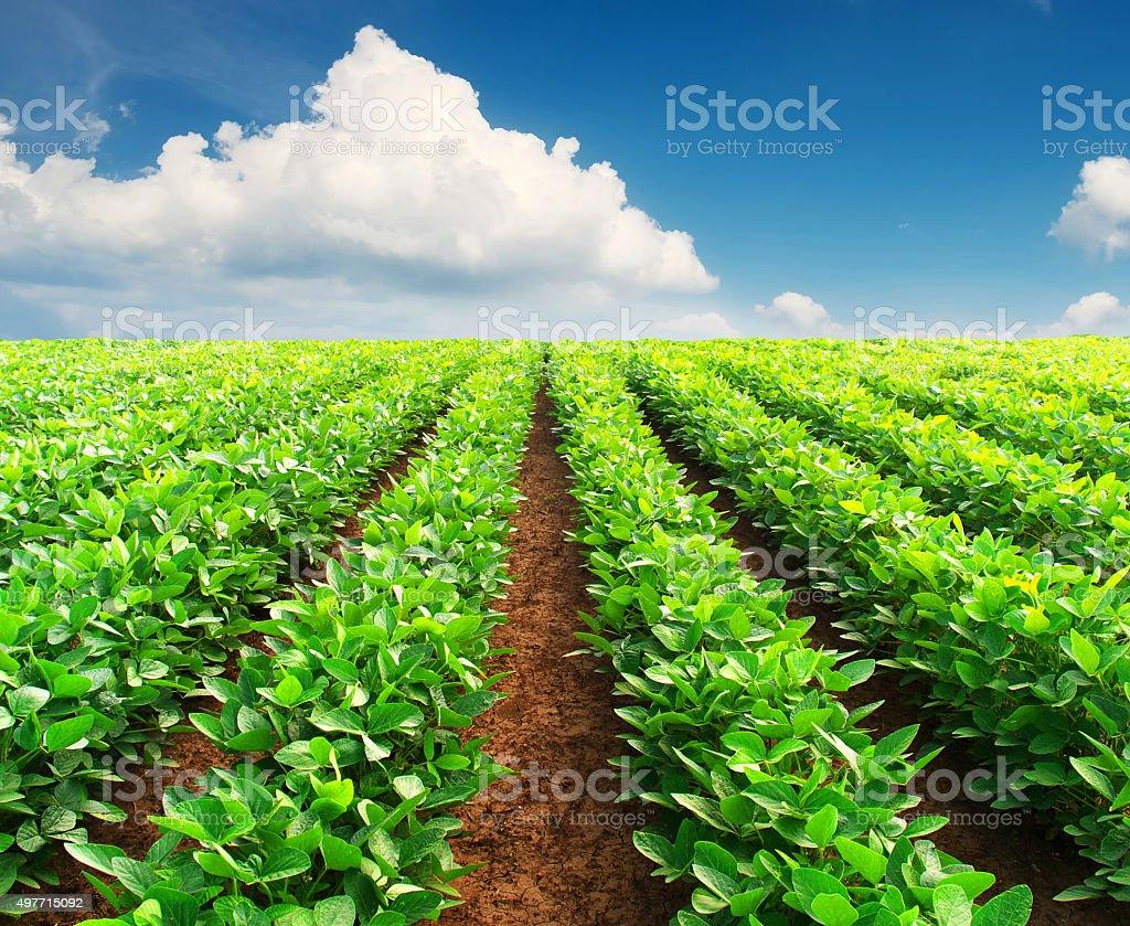 Agricultural landscape stock photo