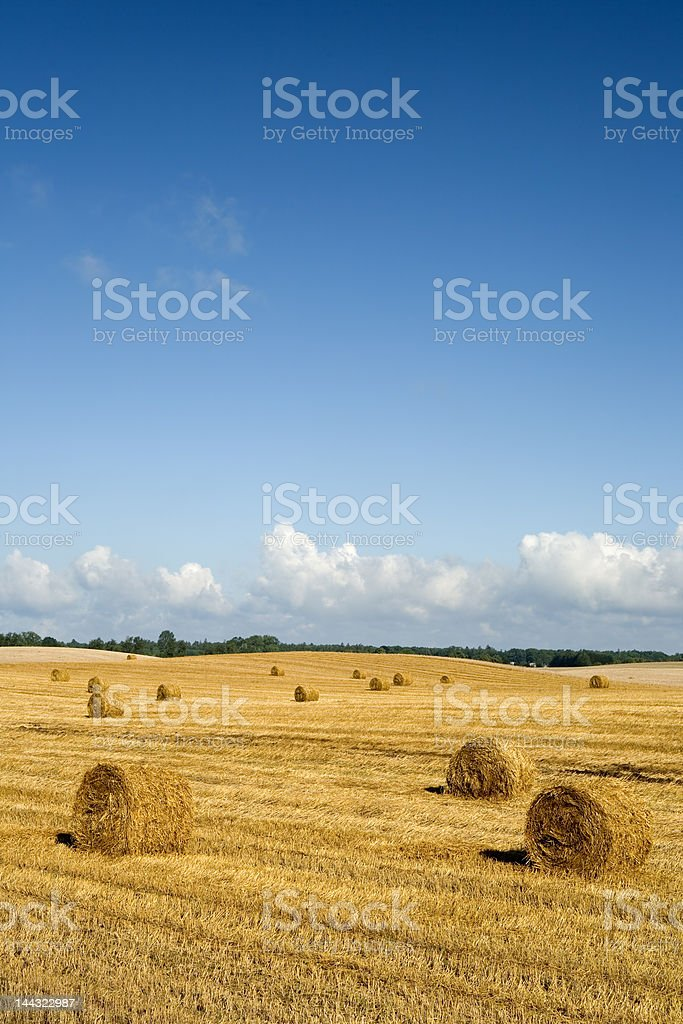 Agricultural landscape with bales of straw royalty-free stock photo