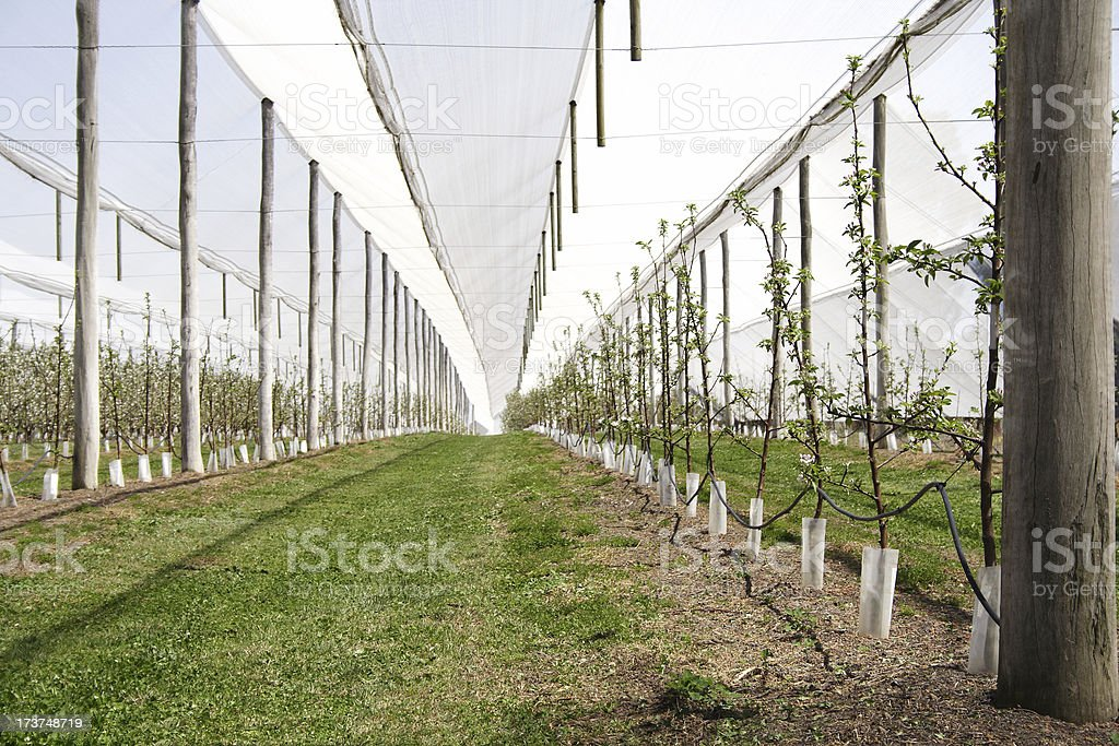 agricultural orchard royalty-free stock photo