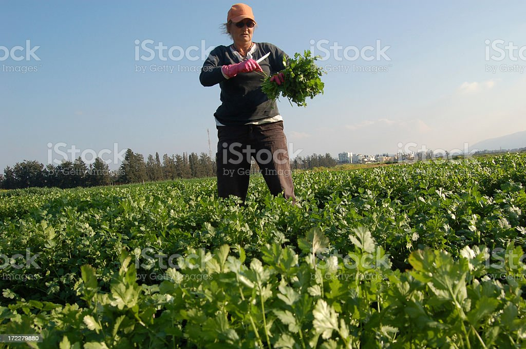 Agricultural royalty-free stock photo