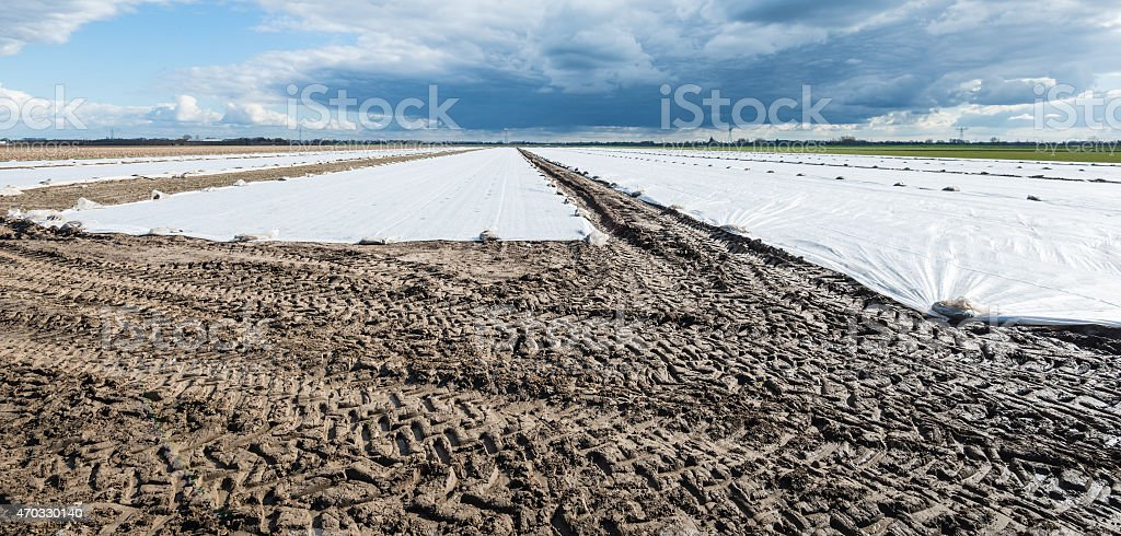 Agricultural plastics affixed to the field stock photo