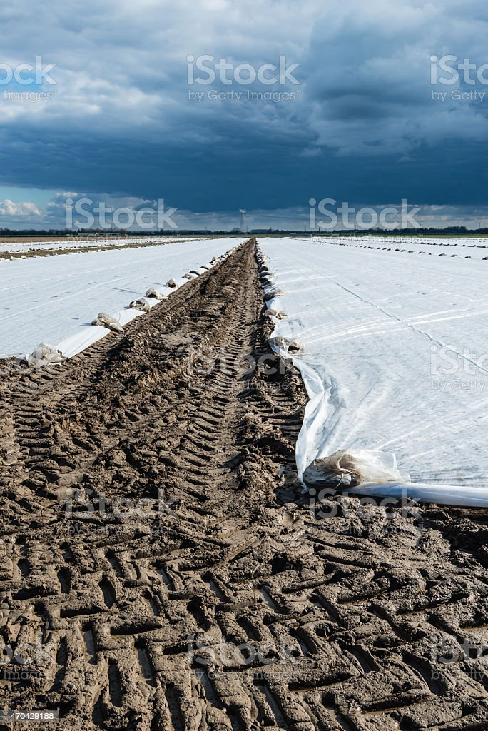 Agricultural plastics  and tire tracks from the tractor stock photo