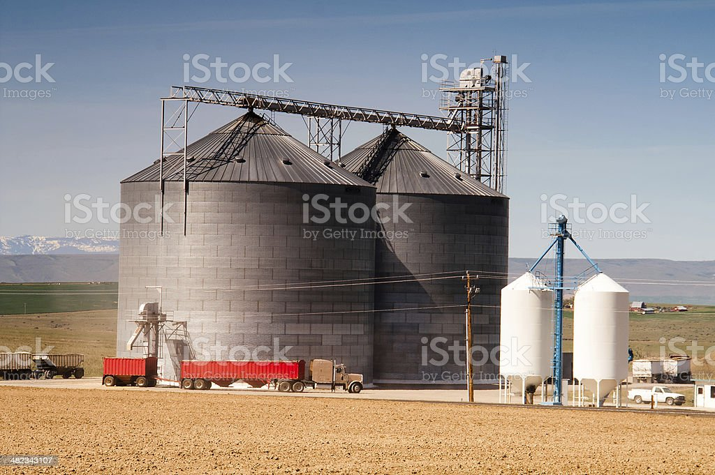 Agricultural Silo Loads Semi Truck With Farm Grown Food Grain stock photo