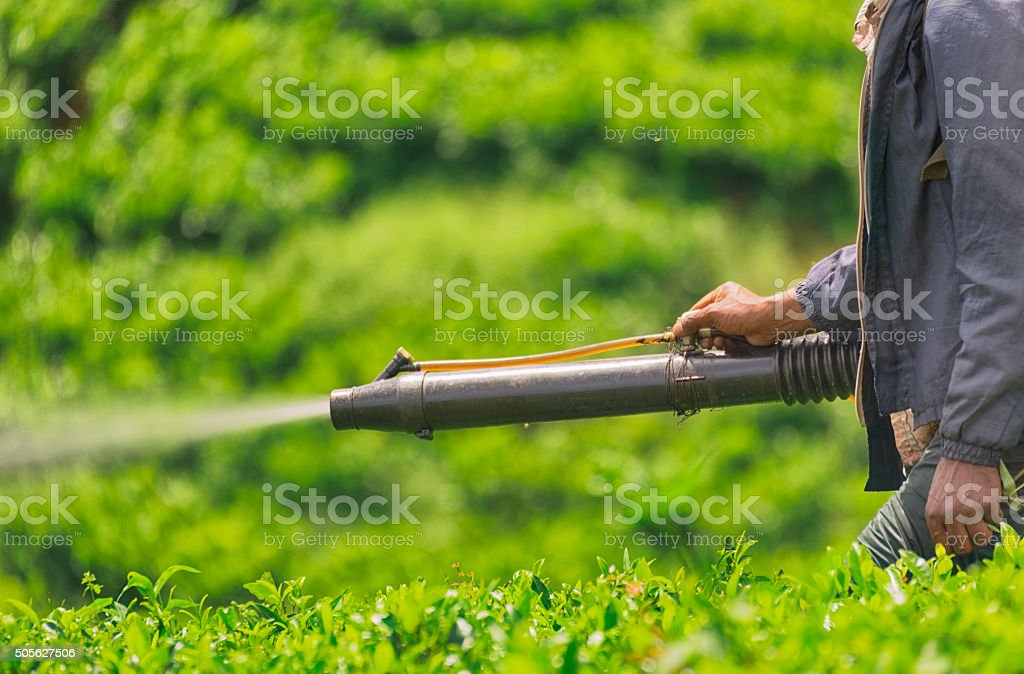 Agricultural Spraying in Tea Plantations of Sri Lanka stock photo
